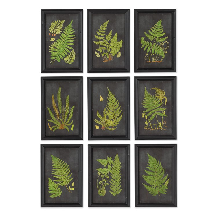 Framed fern botanical prints set of 9
